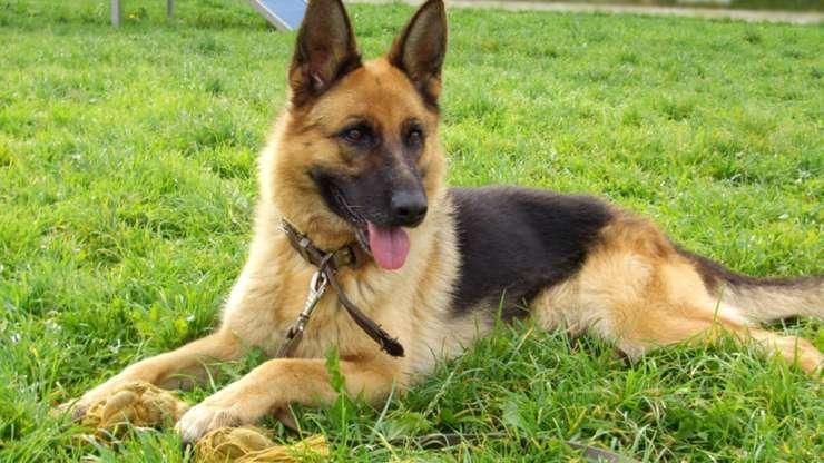 Как я лечил собаку, или возможности остеопатии в ветеринарии